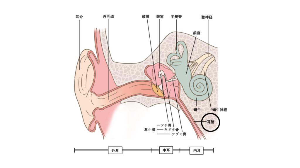 耳管狭窄症とは