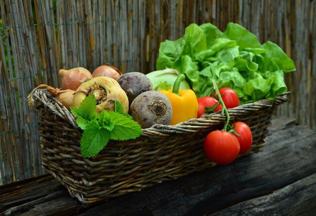 【メディミールレポ】食事制限の強い味方!2つのセットを徹底比較